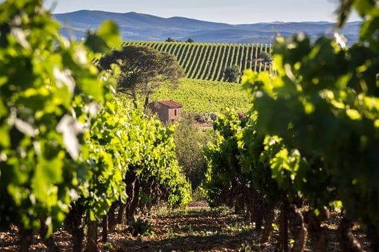 Cazal Viel Vieilles Vignes rouge